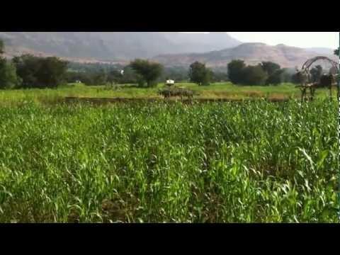 My Field - Chandak, Wai, Satara, Maharashtra