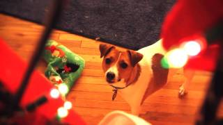 Best Friends Dog Training Holiday Mischief