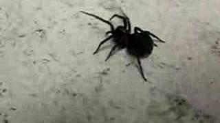 spider walking