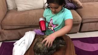 أول مره شفا تغسل  قطتها  الجديدة !!