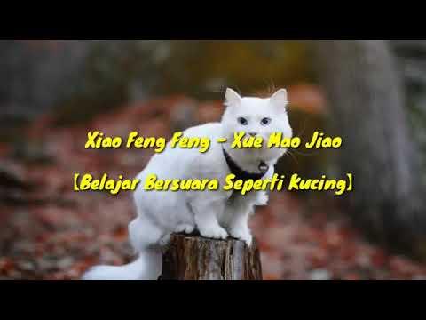 xue-mao-jiao-lirik