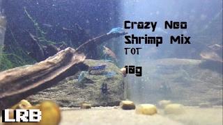 tot ep 4 craziest mixed neo freshwater shrimp tank 10g