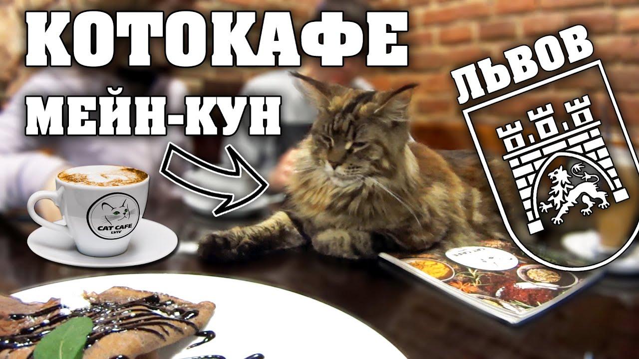 Смешные Коты в КотоКафе (Cat Cafe) и Наглый Мейн Кун. [HD] Дом Легенд и Дом Учёных. Украина. Львов.