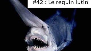 Tout sur les animaux #42 : Le requin lutin