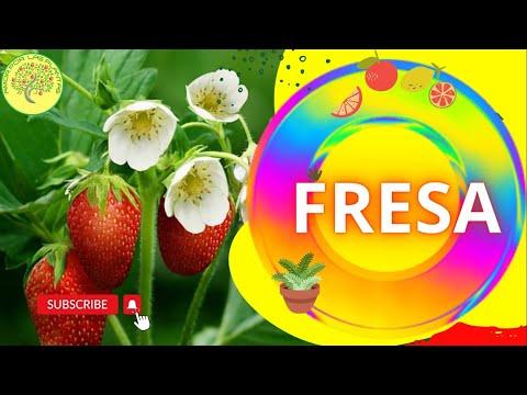 semilla de la fresa