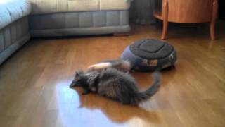 Норвежские лесные котята из питомника Gottheit.3gp
