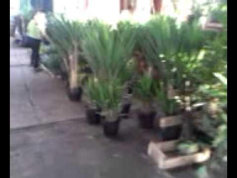 Flores E Plantas No Ceagesp-ceasa Sp