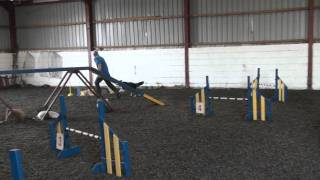 Dog Agility Training Pt2
