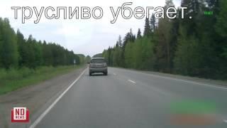Машина тагильского мэра нагло подрезает на трассе