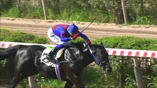 Vidéo de la course PMU PREMIO JAQUE MATE