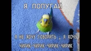 Свобода Попугаю (попугай прикольные картинки  ) смотреть июнь прикол про попугая