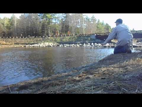 Brown Trout Fly Fishing New Hampshire USA