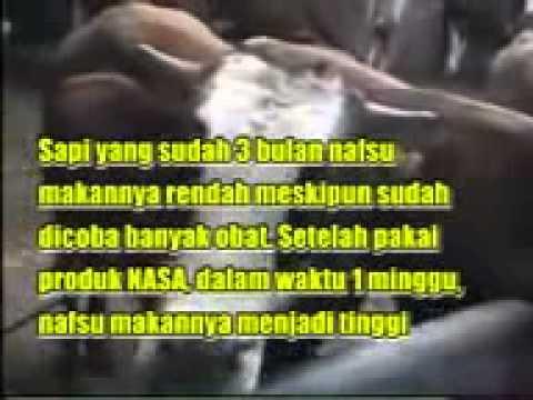 TERNAK SAPI PEDAGING NATURAL NUSANTARA YouTube - YouTube