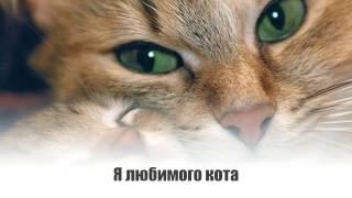 1 марта день кошек. Видео открытки.