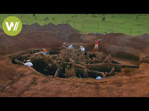 Secret Megalopolis Of Ants Uncovered - Truly A Wonder Of The World !