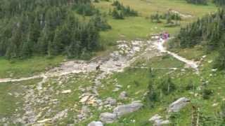 Grizzly Bear vs Hikers in Glacier National Park