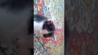 Котёнок разбил телефон