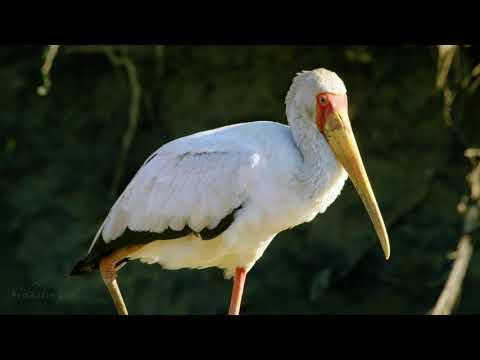 5K African Wildlife   Mana Pools National Park, Zimbabwe