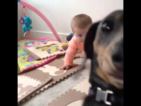 Sorry, Baby. No One's Putting This Dog In The Corner