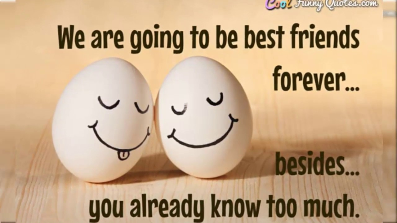 Quotes About Friendship Funny 5