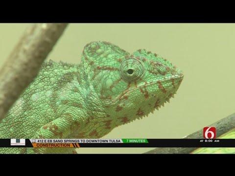 Wild Wednesday Visits Tulsa Zoo's Madagascar's Exhibit