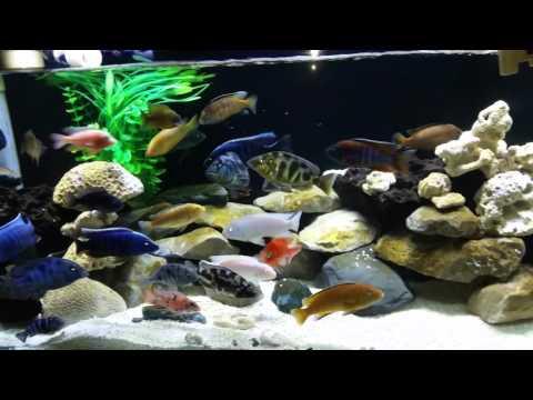 DIY automatic water change aquarium set-up.