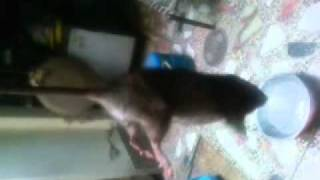 Video0003.3gp