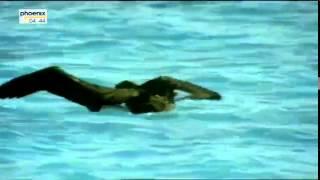 Geheimnisvolle Tigerhaie   Spurensuche im Ozean Doku über Tigerhaie Teil 1