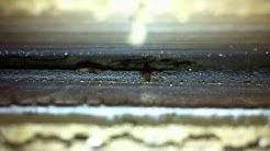 Plateau Pest Control Subterranean Termites underneath window seal