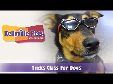 Kellyville Pets | Tricks Class for Dogs