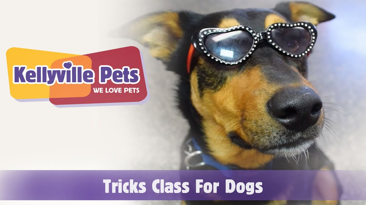 Dog Trick Classes Kellyville Pets