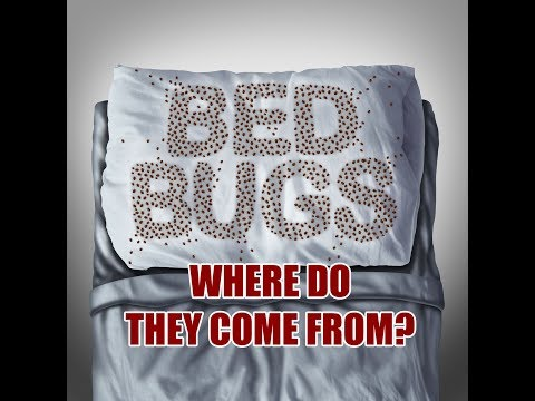 TOP 3 PLACES BEDBUGS COME FROM! Number 3 MIGHT surprise you!