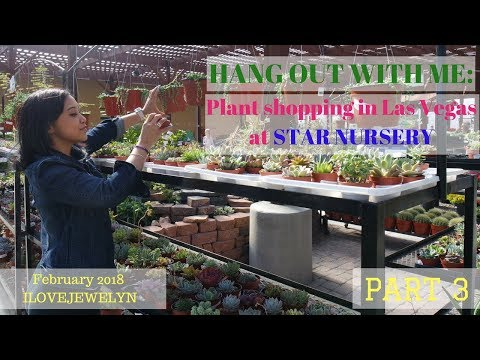 Hang out with me: Plant shopping in Las Vegas Star Nursery Part 3 | February 2018 | ILOVEJEWELYN