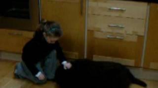 Training Kramer The Newfoundland Puppy