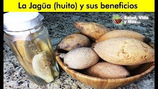 Descubre la Jagua y sus beneficios