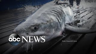 Great white shark believed to be lurking off Connecticut coast