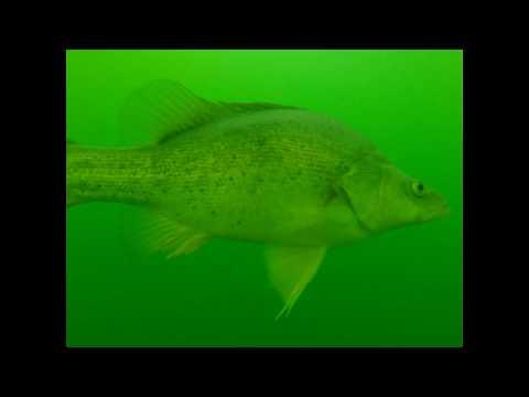 What Lurks Below, Episode 1: Burrinjuck Dam Underwater
