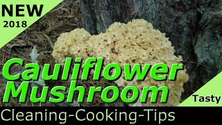 Cleaning and Cooking the Cauliflower Mushroom how to cook Sparassis crispa 2018 recipes