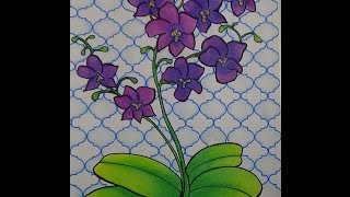 Phalaenopsis Orchid Drawing