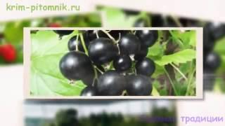 видео zemun.ru