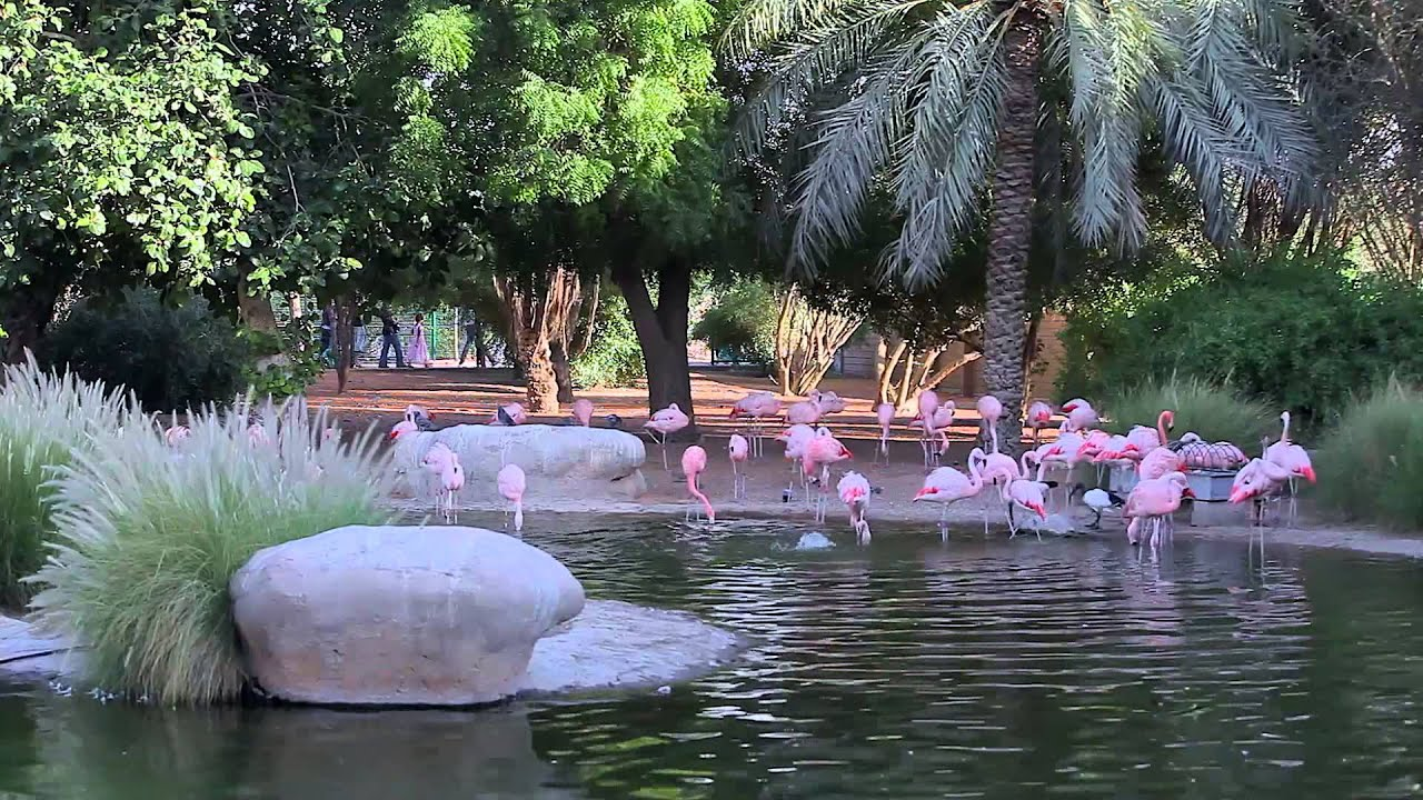 Emirates Wallpaper Hd Visiting The Al Ain Zoo In Hd Youtube