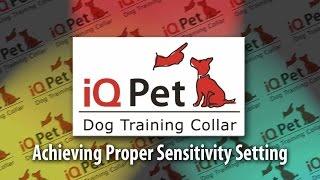 Iq Pet Dog Training Part 2 - Finding The Proper Setting