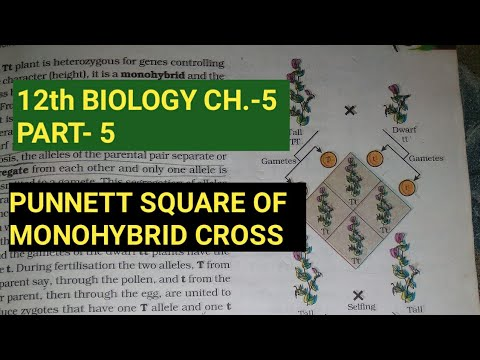 Class 12 biology chapter 5,part 5||inheritance of one gene||by study with farru,part 4 thumbnail