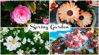 Spring Garden 2018   Jenny E