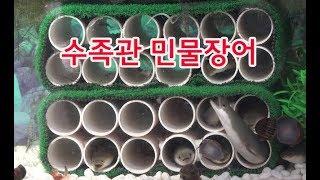 민물장어수족관모습,뱀장어,대물장어,미꾸라지,장어낚시