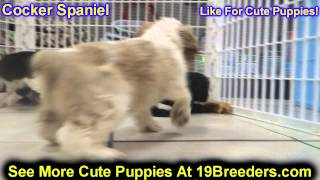 Cocker Spaniel, Puppies, For, Sale In Toronto, Canada, Cities, Montreal, Vancouver, Calgary