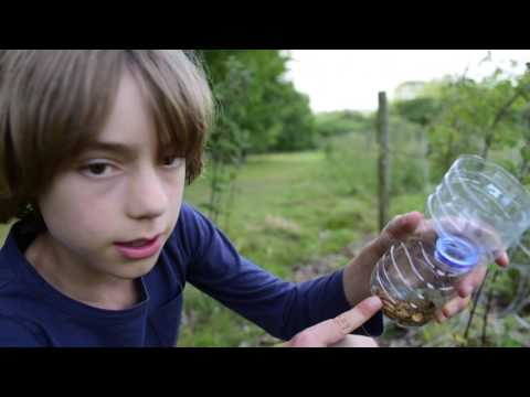 Nature With Artie -  How To Make Lizard Traps