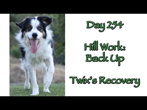 Day 254: Hill Work - Backing Up