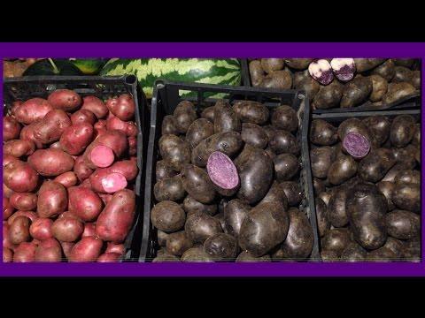 Сорт картофеля Ред Скарлет фото, отзывы, описание