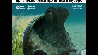 Прятки осьминогов